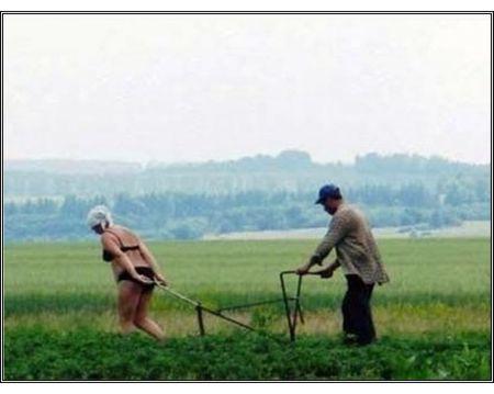 Rolnictwo w Rosji