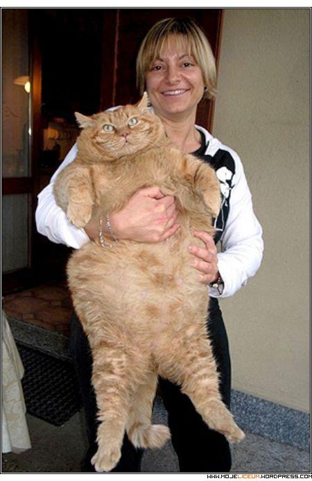 Garfield - Orazi (16kg)